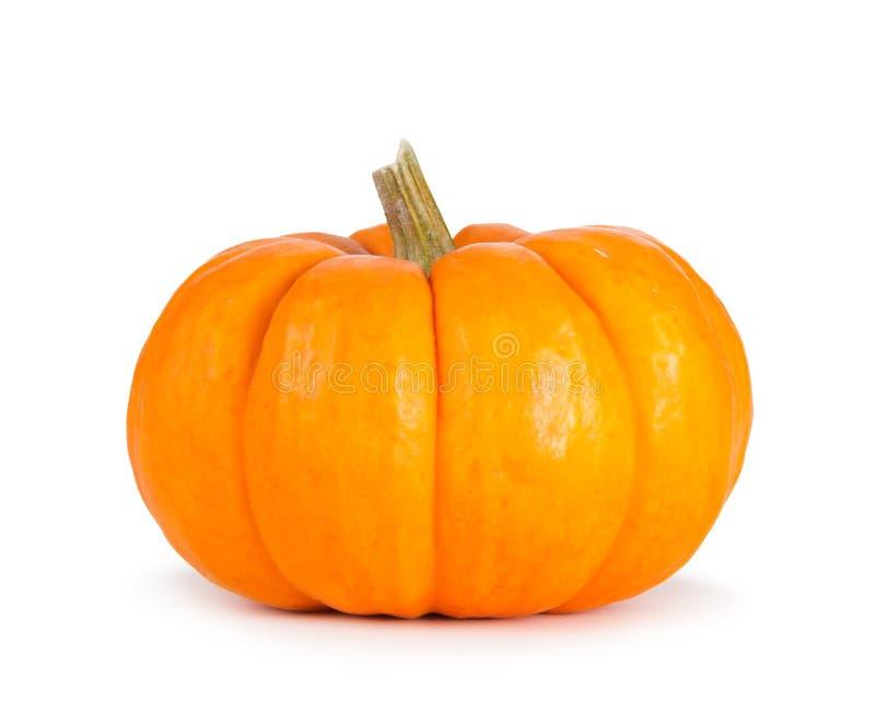 Mini Orange Pumpkin Isolated auf Weiß lizenzfreie stockfotos