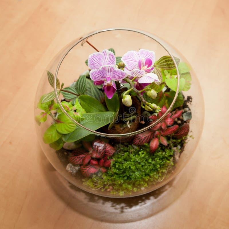 Mini orchidée et d'autres usines de maison images stock