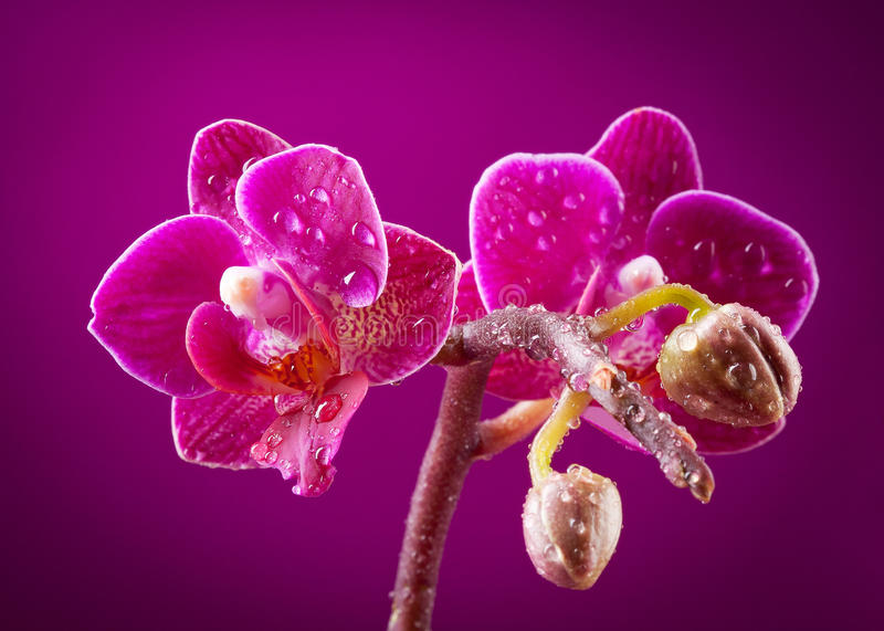 Download Mini orchid stock image. Image of object, light, fresh - 24423627