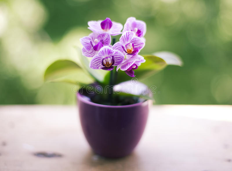 Mini orchid. Against the green background royalty free stock photo
