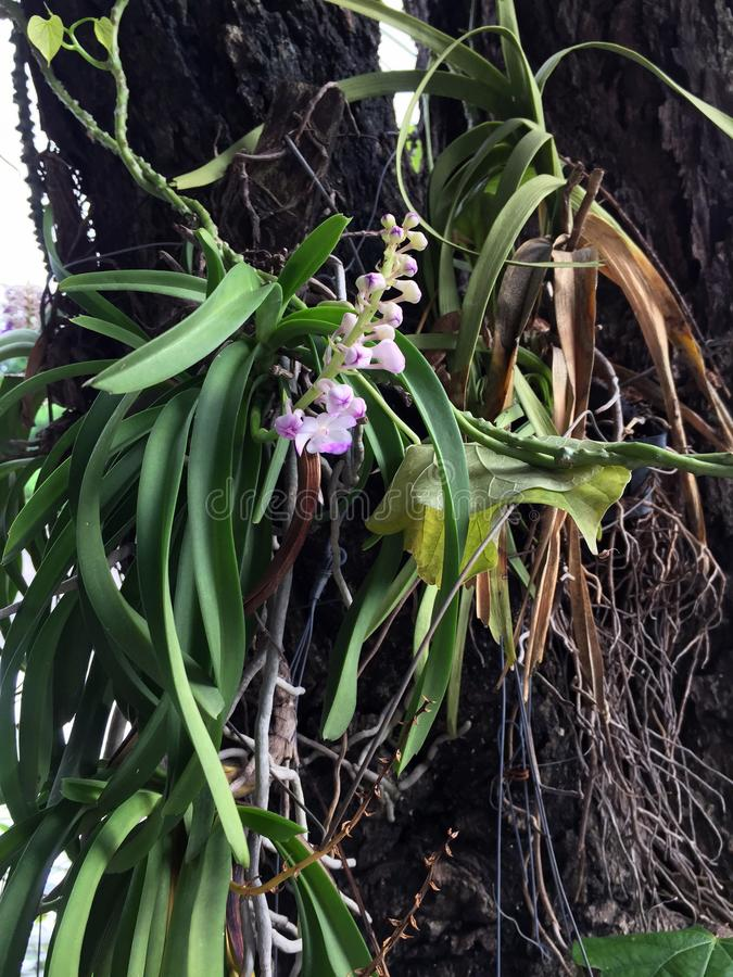 Mini orchids on the big tree. Orchids are the largest family of blooming flowers. royalty free stock photo