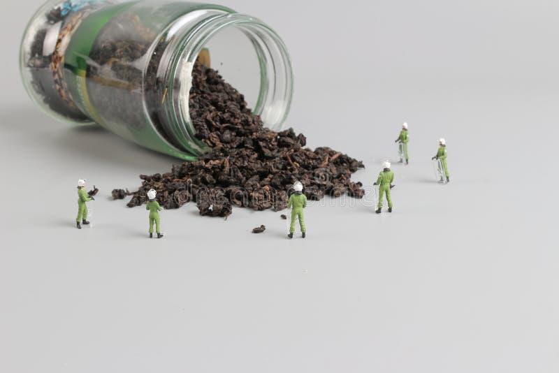 Mini pacnięcie drużyna z zrzuconym herbata obraz royalty free