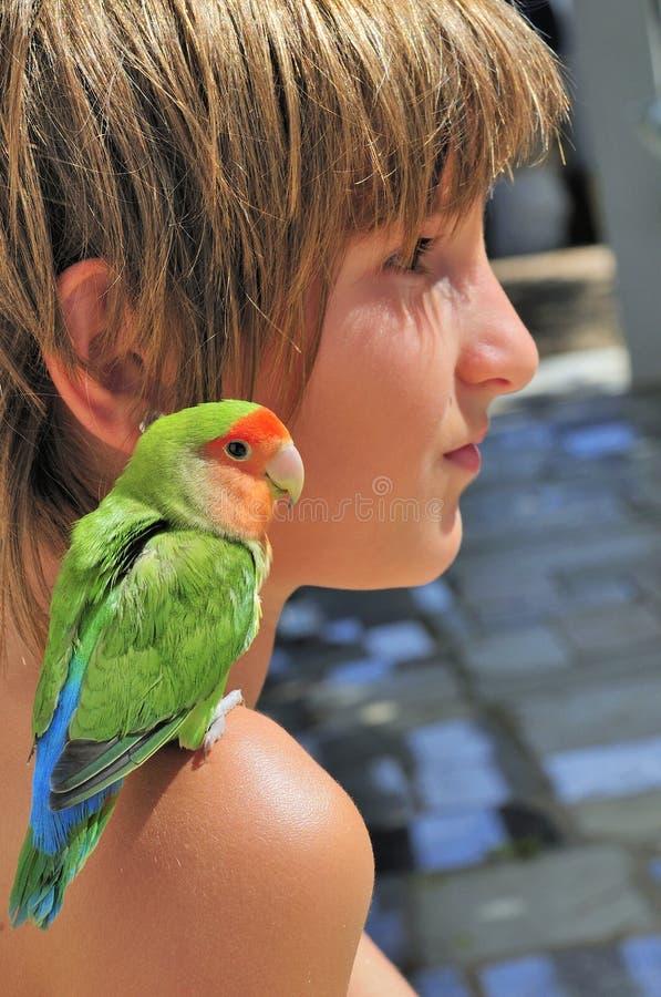 Mini pappagallo sulla spalla fotografia stock libera da diritti