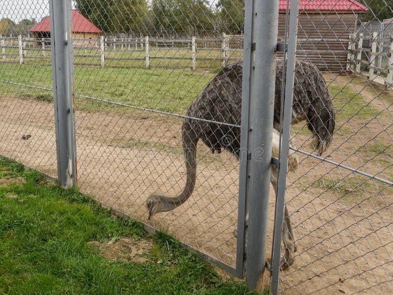 Mini parque zoológico en la ciudad de Pyatigorsk en Rusia fotos de archivo libres de regalías