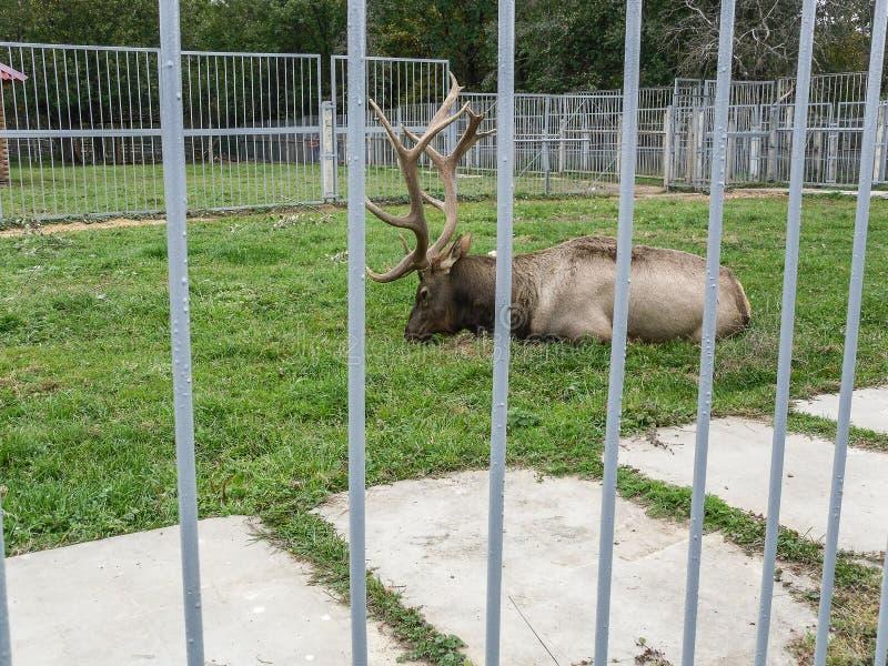 Mini parque zoológico en la ciudad de Pyatigorsk en Rusia imagen de archivo