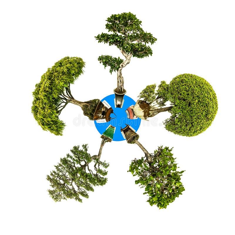 Mini pięć planety bonsai różni drzewa fotografia royalty free
