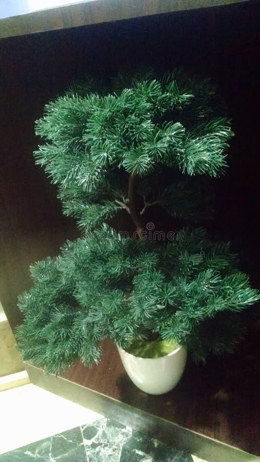 Mini pianta, natura, facente il giardinaggio fotografia stock