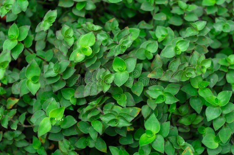 Mini piante della tartaruga nel giardino immagine stock