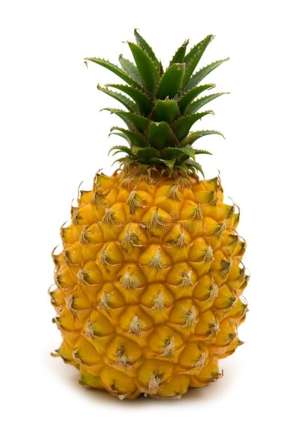 Mini pineapple royalty free stock photography