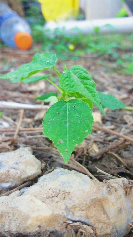 Mini planta foto de stock royalty free