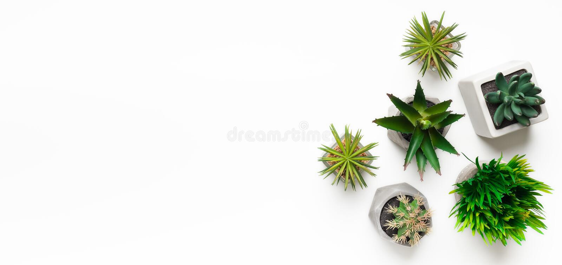 Mini plantas suculentas en los potes aislados en el fondo blanco imagen de archivo libre de regalías