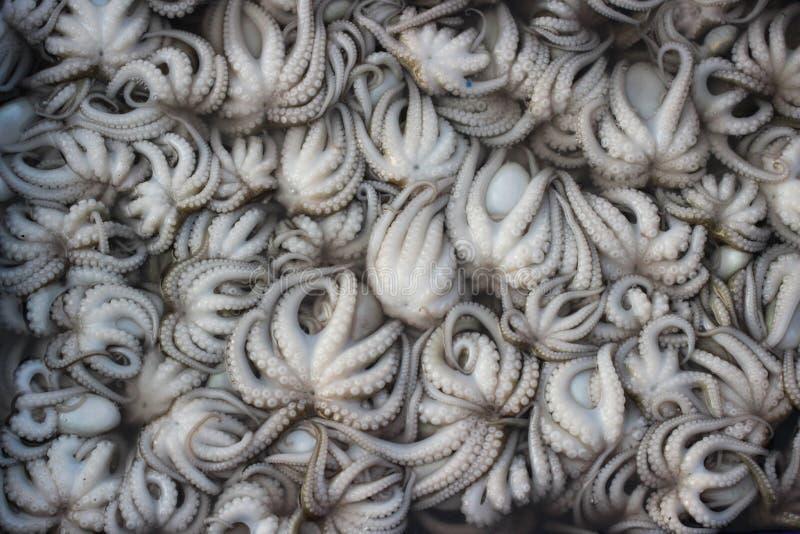 Mini poulpes frais sur le marché de fruits de mer photos libres de droits