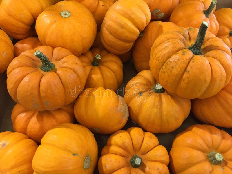Mini Pumpkin shaped Gourds. Little gourds shaped like tiny pumpkins. Great for Halloween or Fall centerpiece on a table. Orange with dark green stems royalty free stock image
