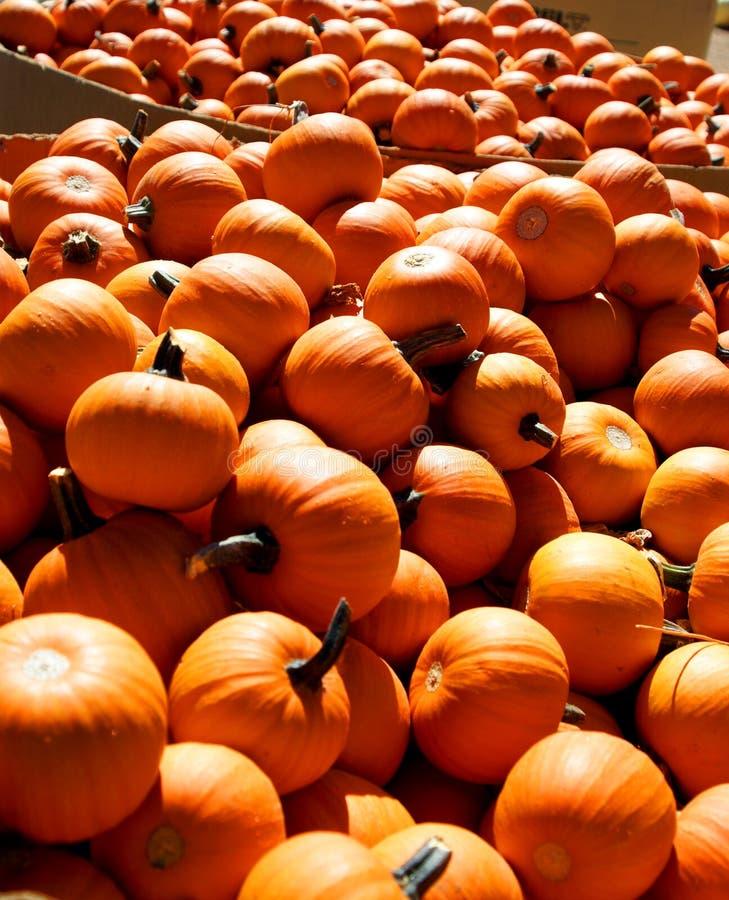 Free Mini Pumpkins Stock Image - 11209261