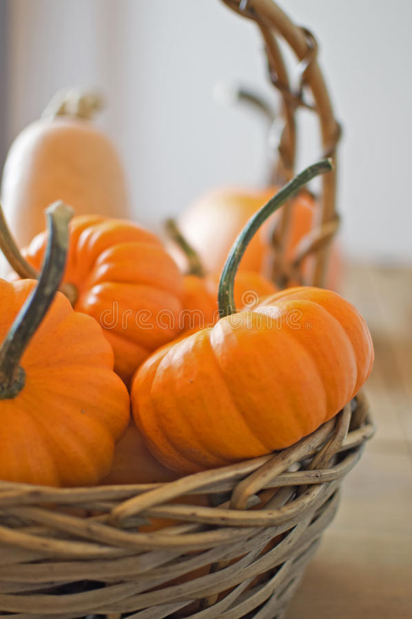 Mini Pumpkins stockfoto