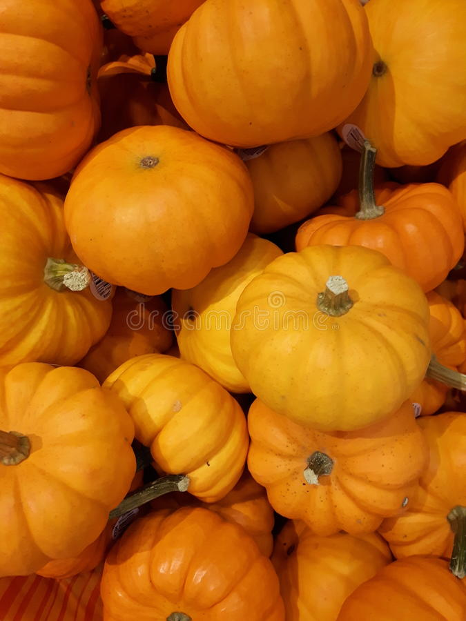 Mini Pumpkins stockbilder