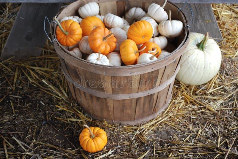 Mini Pumpkins in einem Scheffel-Korb lizenzfreies stockfoto