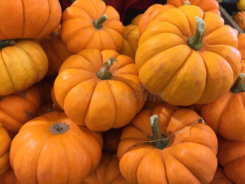 Mini Pumpkins en el mercado imagenes de archivo