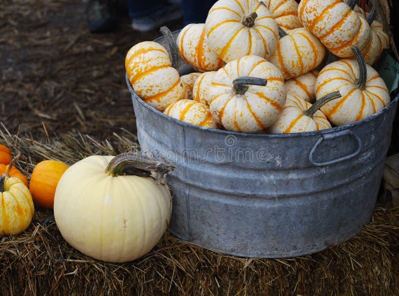 Mini Pumpkins en una tina galvanizada que se sienta en una bala de heno imagen de archivo