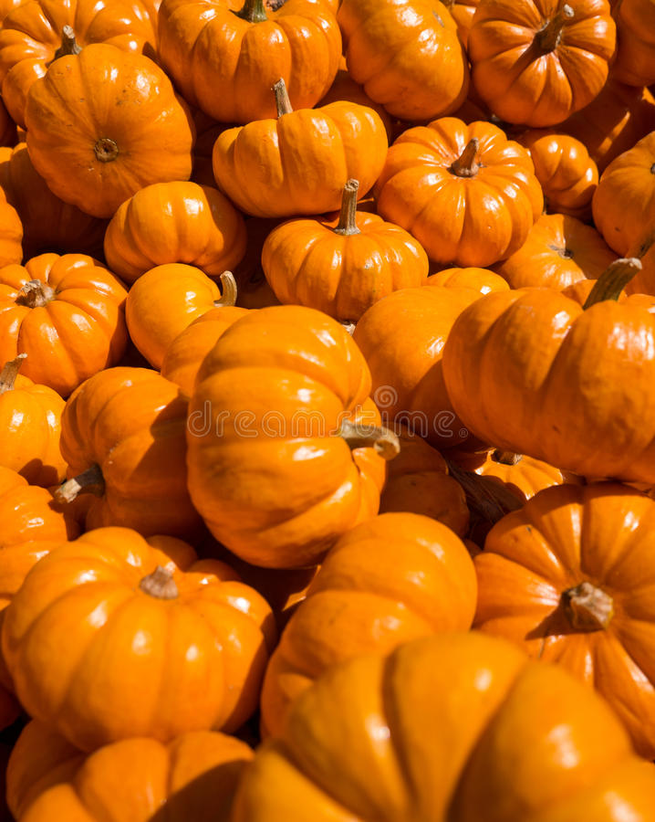 Mini Pumpkins in un mazzo fotografie stock libere da diritti