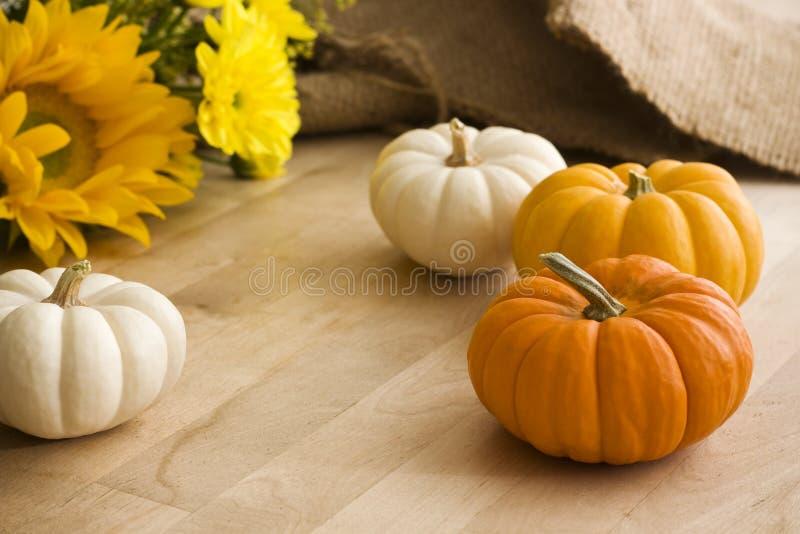 Mini Pumpkins y flores en una tabla de madera imagen de archivo libre de regalías
