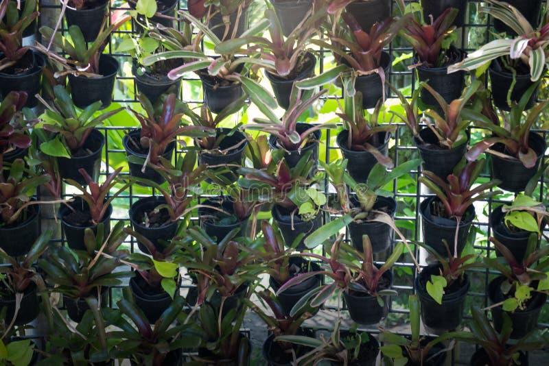 Mini roślina garnek Dekorujący W ogródzie fotografia stock