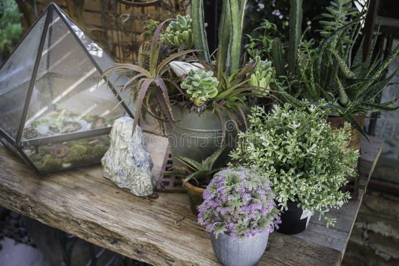 Mini roślina garnki dekorujący w ogródzie zdjęcie royalty free