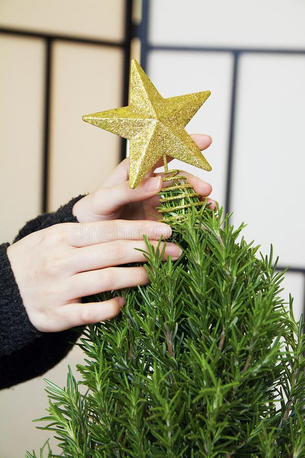 Mini Rozmarynowa choinka Dekoruje z złoto gwiazdy ornamentami w studiu z złoto gwiazdą zdjęcie royalty free