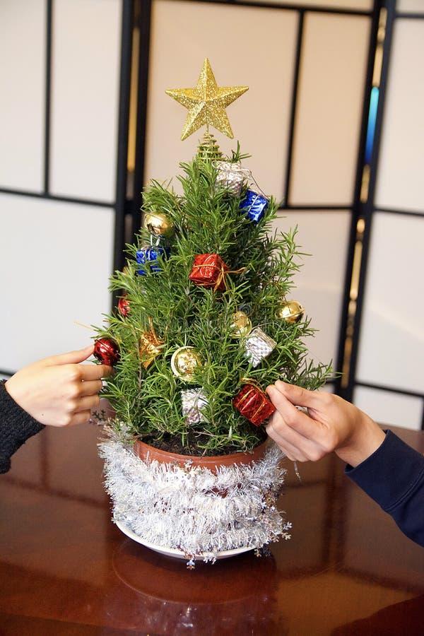 Mini Rozmarynowa choinka Dekoruje z złoto gwiazdy ornamentami w studiu z złoto gwiazdą zdjęcia stock