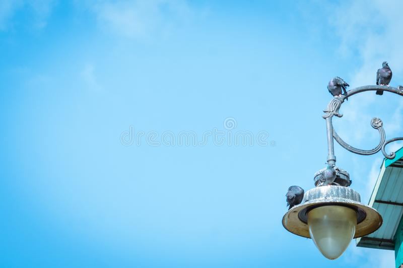 Mini sensor solar lamp street light with blue clear sky background, low angle view. Birds sitting on the lamp stock image