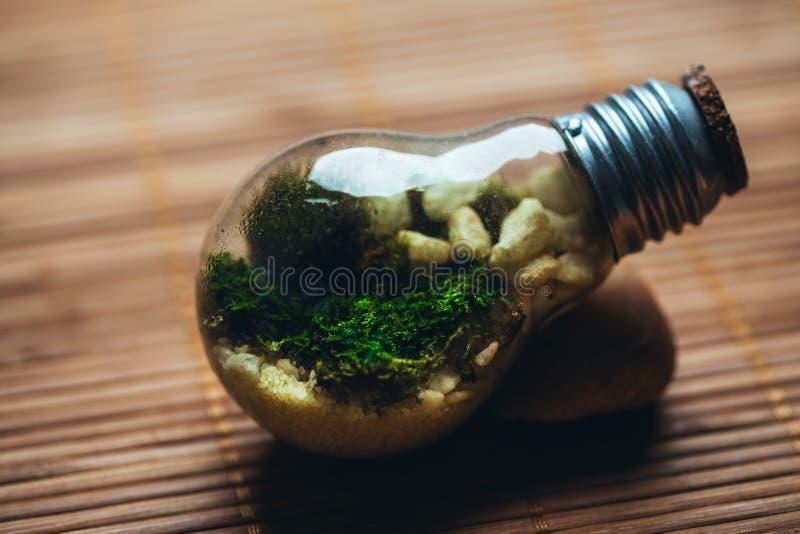 Mini-serre avec de la mousse et pierres dans l'ampoule sur un fond en bois photo stock