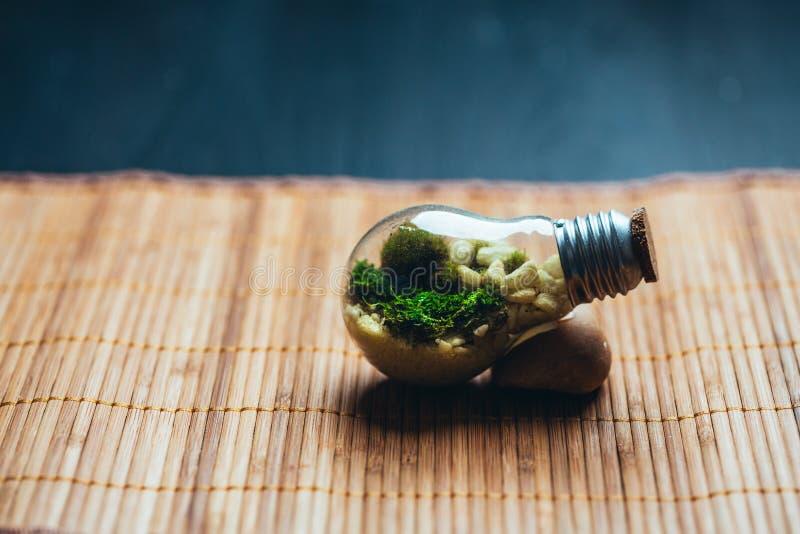 Mini-serre avec de la mousse et pierres dans l'ampoule sur un fond en bois image stock