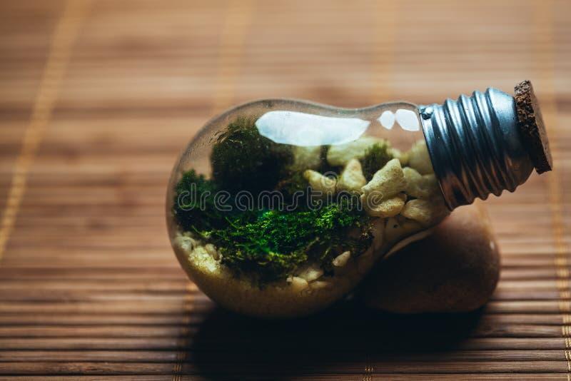 Mini-serre avec de la mousse et pierres dans l'ampoule sur un fond en bois images stock