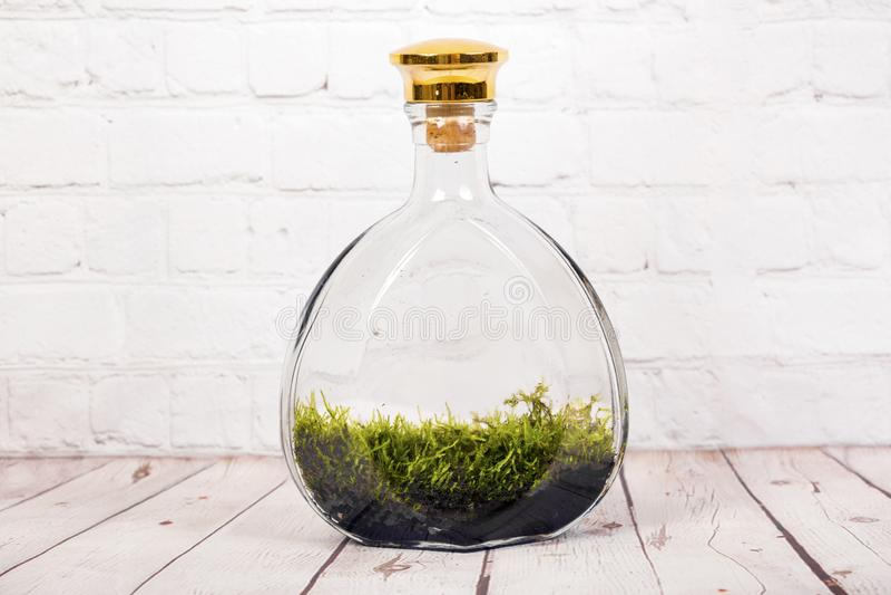 Mini-serre de bouteille avec de la mousse photo libre de droits