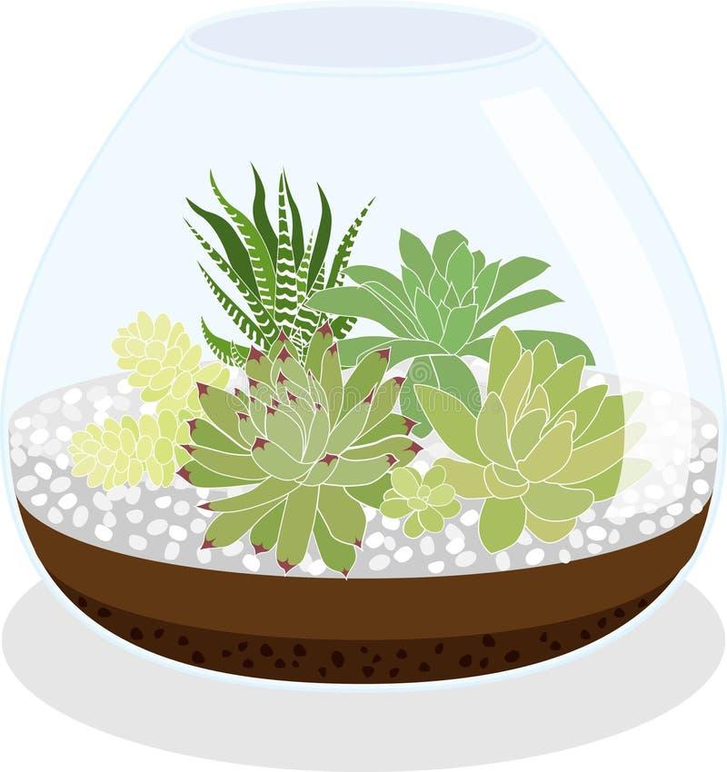 Mini-serre de Succulents illustration de vecteur