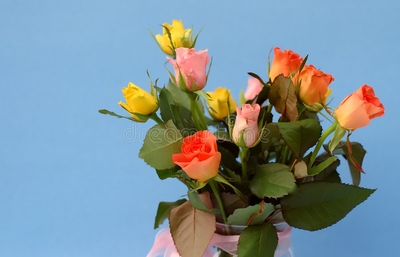 mini stubarwne róże obrazy stock