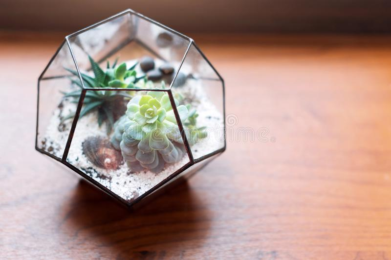 Mini succulent garden in glass terrarium on wooden windowsill. Succulents with sand and rocks in glass box. Home decoration elemen stock images