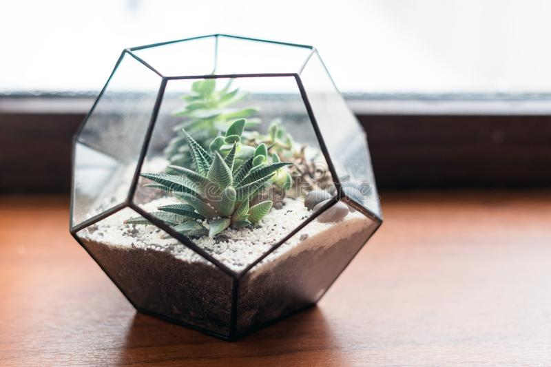 Download Mini Succulent Garden In Glass Terrarium On Wooden Windowsill.  Succulents With Sand And Rocks