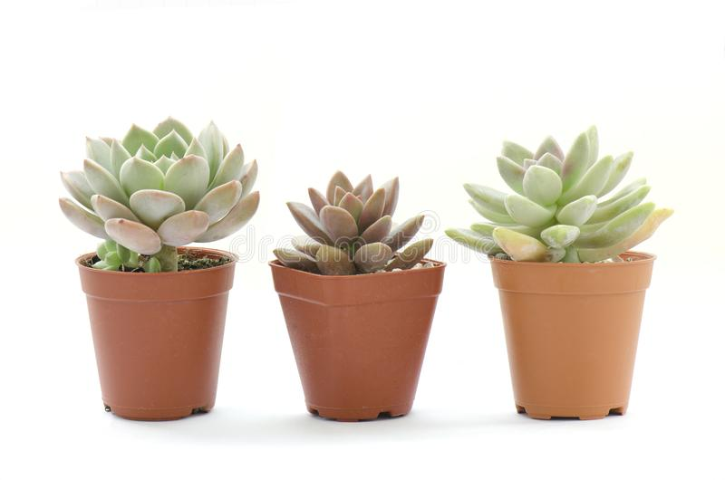 Mini- suckulenta houseplantkrukor fotografering för bildbyråer