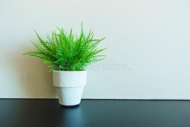 Mini- trädkruka royaltyfri foto