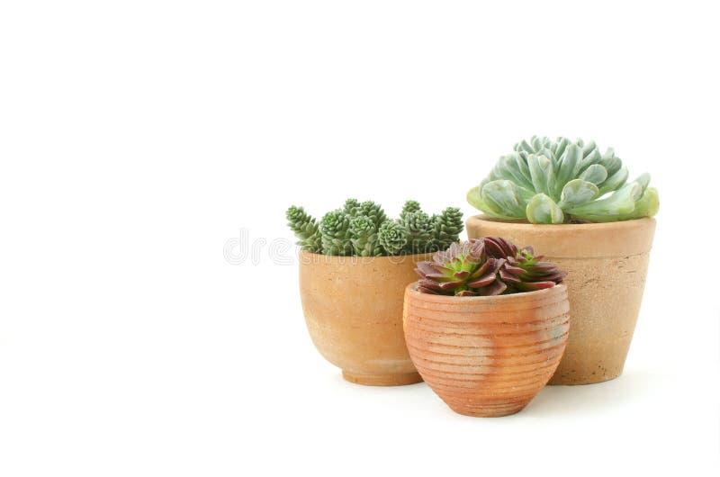 Mini vaso di argilla del succulente immagine stock libera da diritti