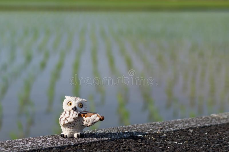 Mini weiße Eulenfigürchen, welche die Violine in einem eben gepflanzten Reisfeldhintergrund spielt lizenzfreies stockbild