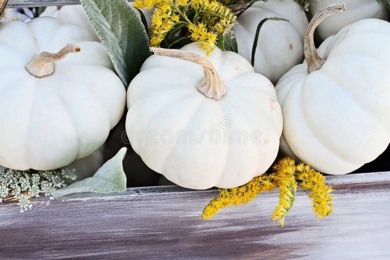 Mini White Pumpkins och vildblommor arkivbild