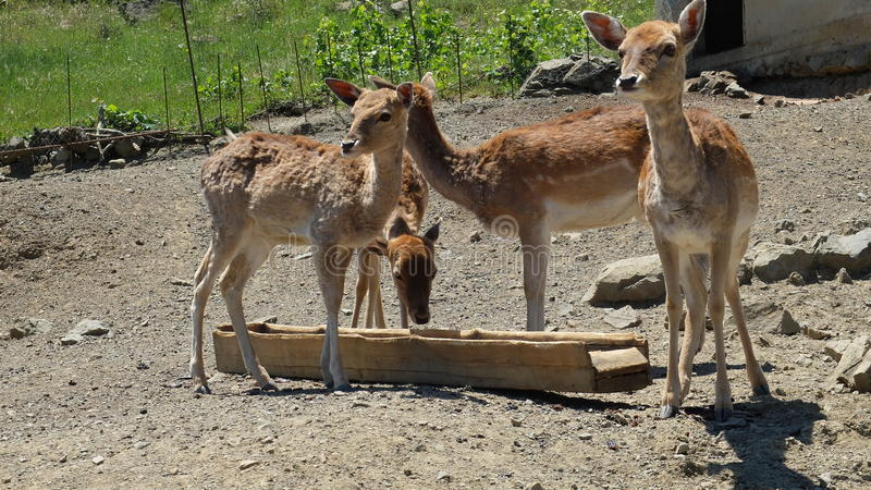 Mini-zoo photos libres de droits