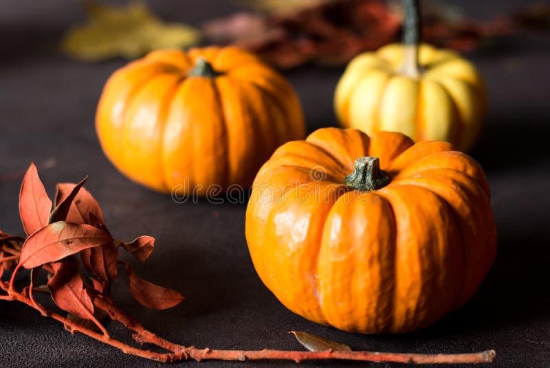 Mini zucche arancio luminose per Halloween su fondo nero fotografia stock libera da diritti