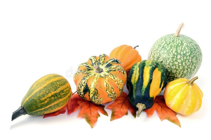 Mini zucche su fondo bianco isolato Halloween immagini stock libere da diritti