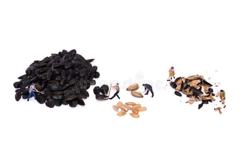 Miniaturarbeitskraftbruch-Sonnenblumensamen Völkerarbeiten Leuteschnittsamen stockfotos