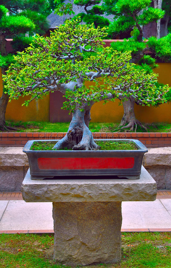 Download Miniature bonsai tree stock photo. Image of hong, china - 19992290