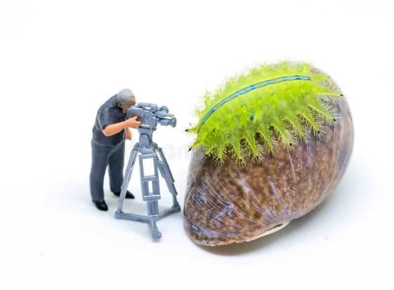 Miniature cameraman and green caterpillar. Operator at work shooting tropical animal. stock photo