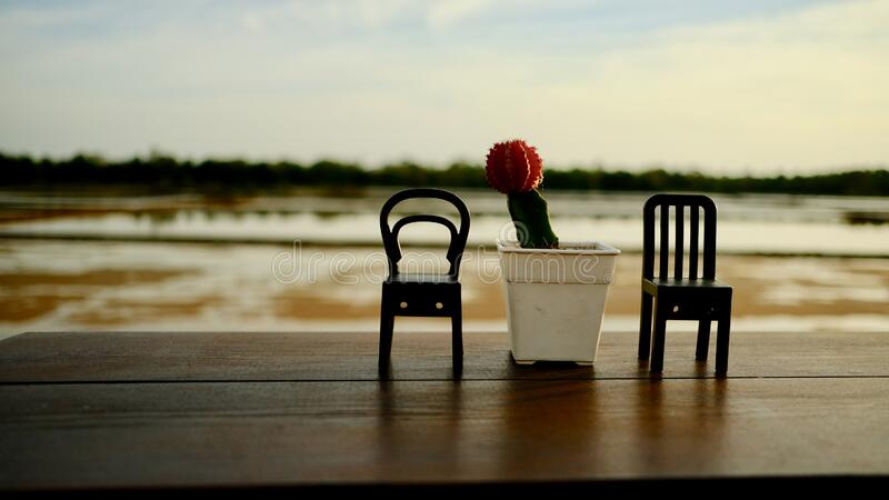Miniature chairs and tiny cactus in a coffee shop. stock photo